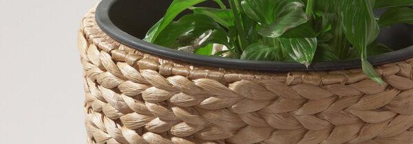 Pflanzkübel Wasserhyazinthe
